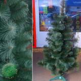 Сосна темно зеленая 70 см.